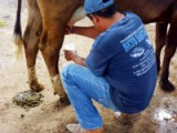 milking in mexico